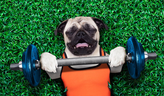 Designing a Good Fitness Program For Your Dog